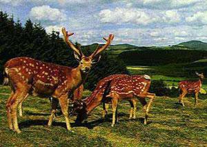 Wildpark Daun